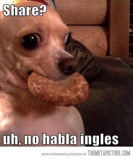 lol, this is so my dog!