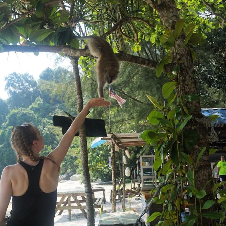 """Hand feeding cute monkeys at Monkey Beach in Penang National Park, Malaysia - 28 Likes, 4 Comments - Sarah  (@rangaadventures) on Instagram: """"penang national park is an excellent day trip to do whilst staying in penang with some beautiful…"""""""