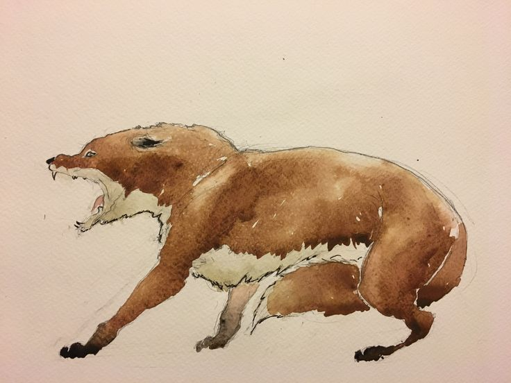 Fox Snarling. Watercolor, pen.