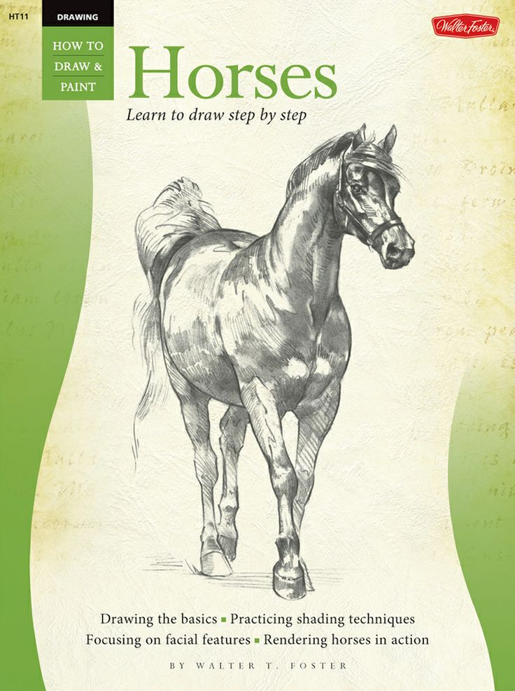 Equine Course Online - How Horses Learn is a 1 hour theory ...