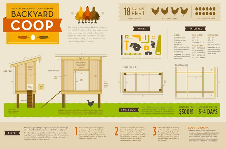 How To Build A Backyard Chicken Coop (Chicken Coop Plan)