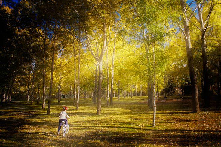 Bowness Park, Calgary,Alberta beginning of the Fall.