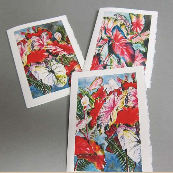 3 Caladium Variety 5 X 7 Note Card Blank Greeting Card Etsy Cards Handmade Blank Cards Blank Greeting Cards