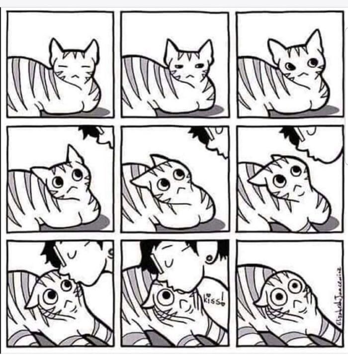 Cat owners will understand. #lol #funny #rofl #memes #lmao #hilarious