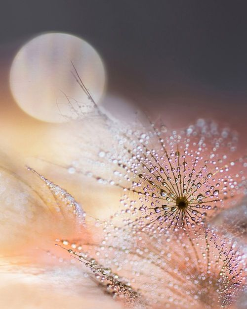 Dew drops @Gazuntai.com Like & Repin. Noelito Flow. Noel songs. follow my links http://www.instagram.com/noelitoflow