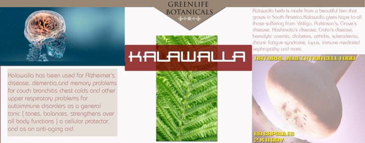 Kalawalla herb is made from a beautiful fern that grows in South America. Kalawalla gives hope to all  those suffering from: Vitiligo, Parkinson's, Grave's  disease, Hashimoto's disease, Crohn's disease, hemolytic anemia, diabetes, arthritis, scleroderma, chronic fatigue syndrome, lupus, immune mediated nephropathy and more.  Kalawalla has been used for Alzheimer's disease, dementia,and memory problems for couch bronchitis chest colds and other upper respiratory problems for  autoimmune…