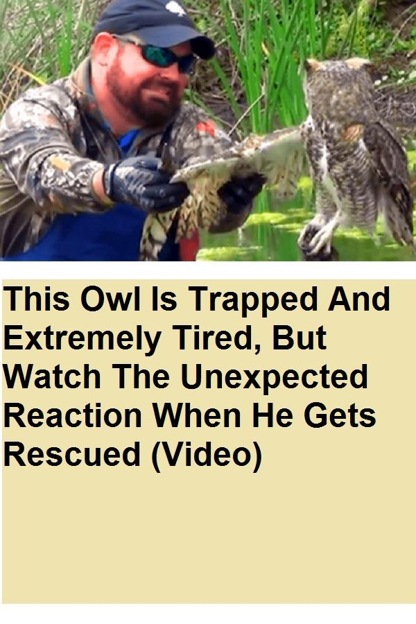 This Owl Is Trapped And Extremely Tired But Watch The Unexpected