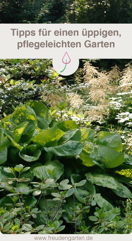 Pflegeleichten Garten Mit Uppigen Beeten Anlegen Pflegeleichter Garten Garten Pflanzen Garten
