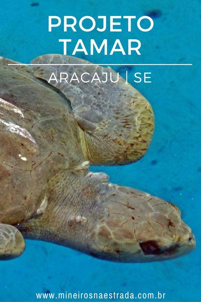 O Projeto Tamar de Aracaju ,SE