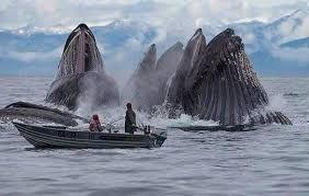 Afbeeldingsresultaat voor whale