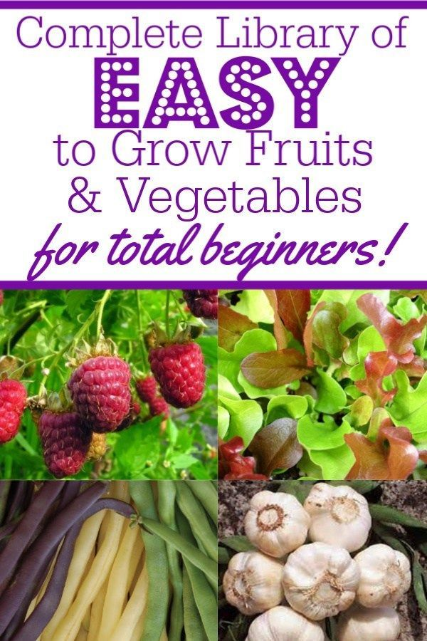 13 Easy To Grow Fruits Vegetables For Absolute Beginning