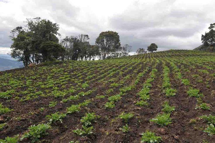 MERCADO BURSÁTIL, ALTERNATIVA PARA EL AGRO. Ante la limitación de recursos estatales para financiar al sector, Finagro les propuso a los productores buscar recursos privados.