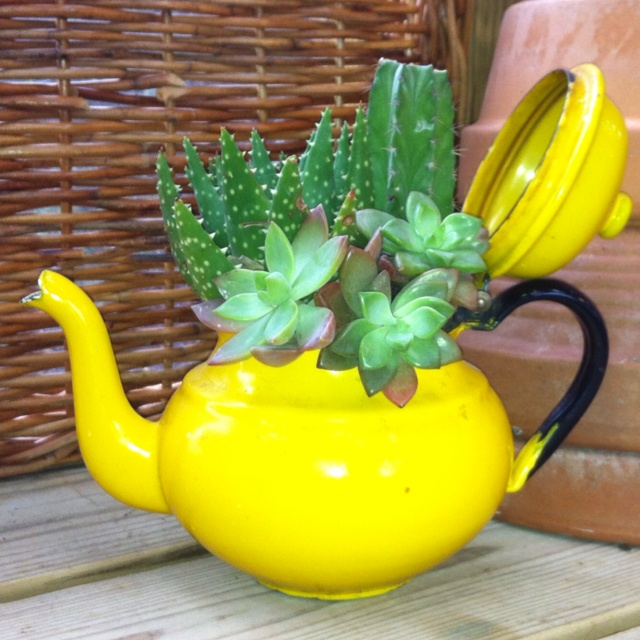 Teapot Planters: 17 Best Images About TEAPOT CONTAINERS On Pinterest