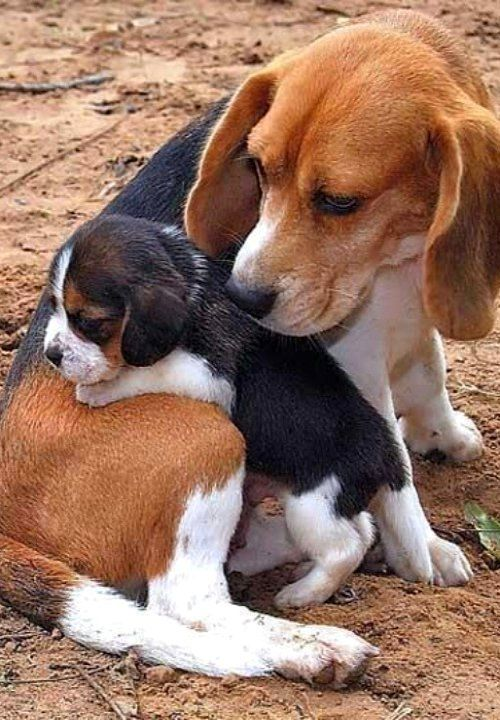 Mum And Her Pup..!