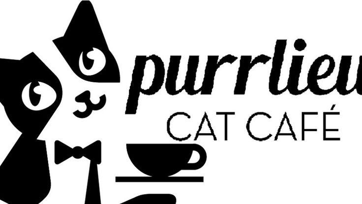 Purrlieu Cat Café project video thumbnail