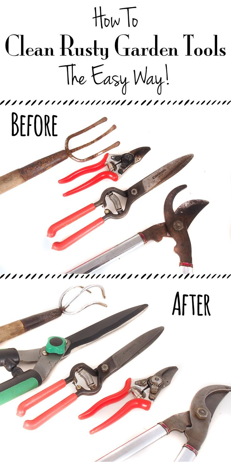 How to Clean Rusty Garden Tools - An often neglected task amongst all the other fruit garden projects. This is super easy and it works!