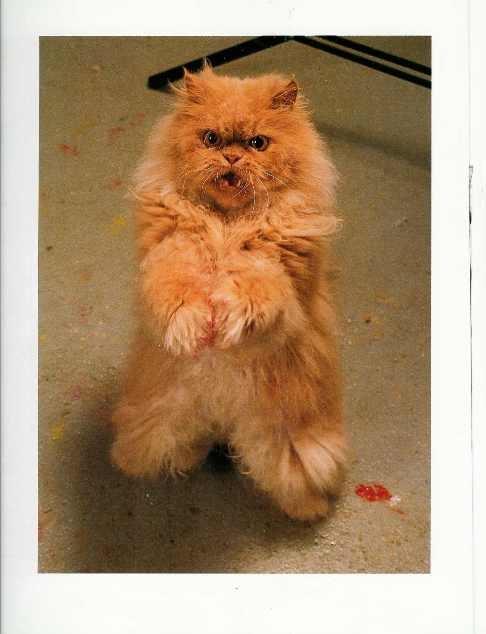 7 best painting cats images on Pinterest Cat art, Kittens and - tapeten für küche