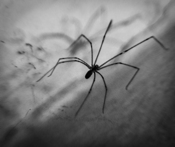 #dark #photoart #spider #black #goth #night #art #photoshoot #deepart #selingunduz #macro