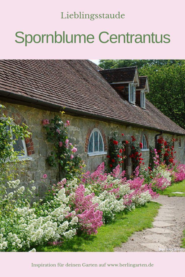Spornblume Centrantus – berlingarten. Glück auf Grün. | Dein Gartenblog | Garten, Balkon, Terrasse, Zimmerpflanzen, Sträuße