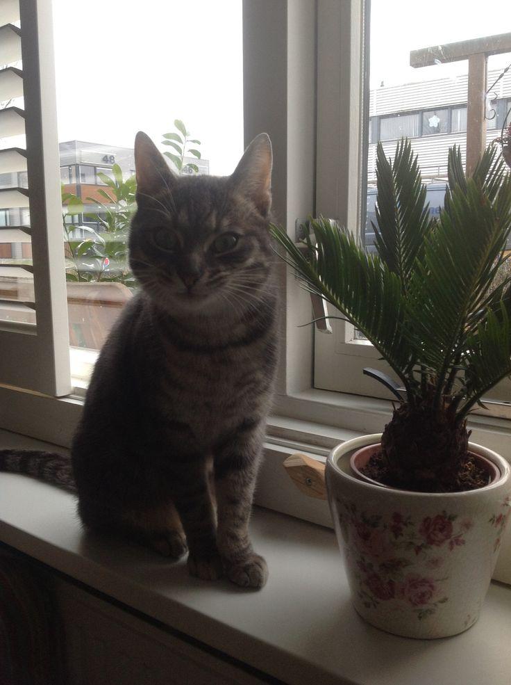 Ollie op de vensterbank, mijn gekke kat