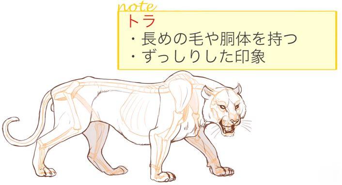 トラの体の特徴