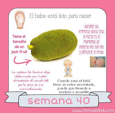 BebeBlog by mimuselina: Semana 40 embarazo. Tamaño y evolución del bebé @m...