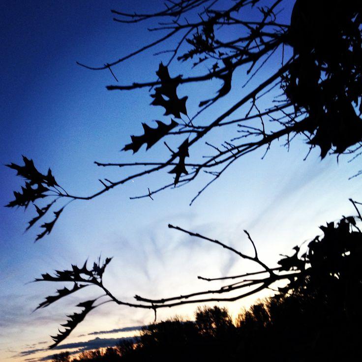 Crisp fall evening.