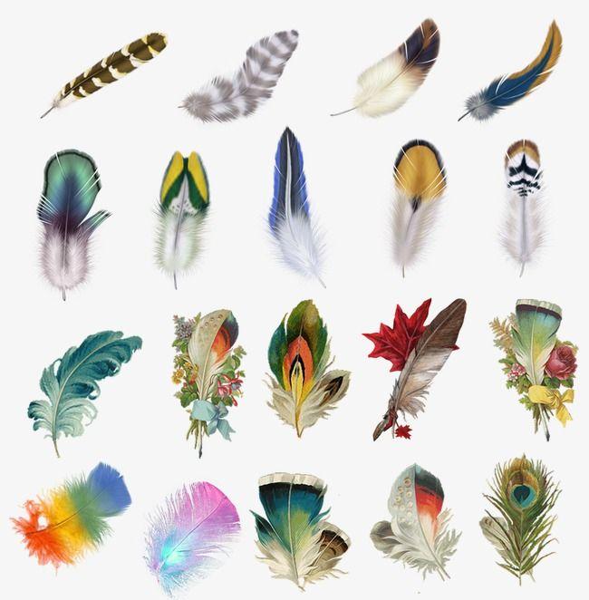 Exquisita Pluma De Color Arte Plumario Plumas De Colores Plumas
