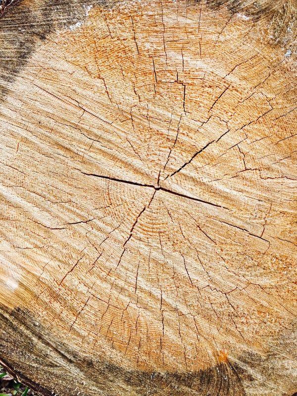 Heizen mit Holz in unterschiedlichen Formen. Holzkessel und Holzvergaser-Kessel als Zentralheizung, Holzöfen (Kaminöfen, Kachelöfen und Dauerbrandöfen) für den Wohnraum, sowie Holzherde zum Kochen und als Zusatzheizung.