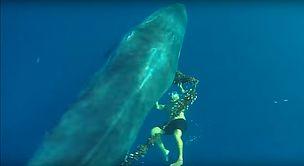 WWF España - El héroe canario que liberó a la ballena también pide el Santuario de WWF