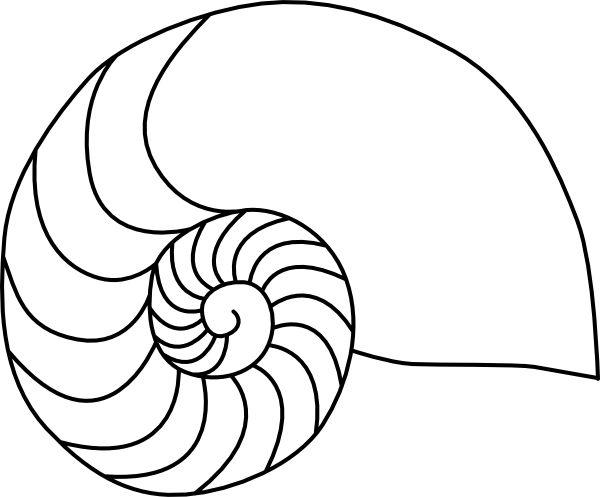 nautilus shell clip art  nautilus clip art  summer