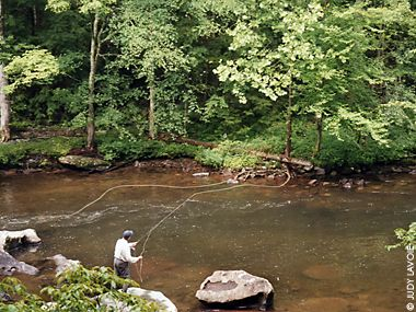 1000 images about fly fishing on pinterest fly fishing for Trout fishing in tennessee