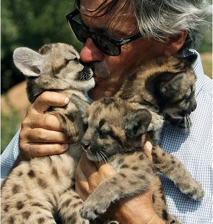 The owner of the Attica Zoological Park holds two-month-old pumas in Spata, near Athens, on Wednesday, Sept. 10, 2008. AP Photo.