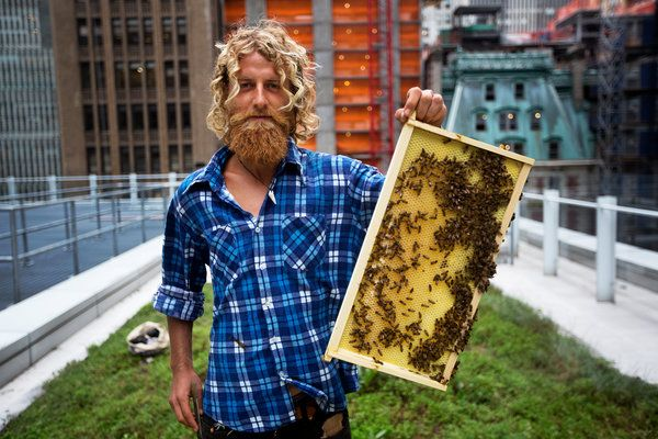 Worker Bees on a Rooftop, Ignoring Urban Pleasures - NYTimes.com
