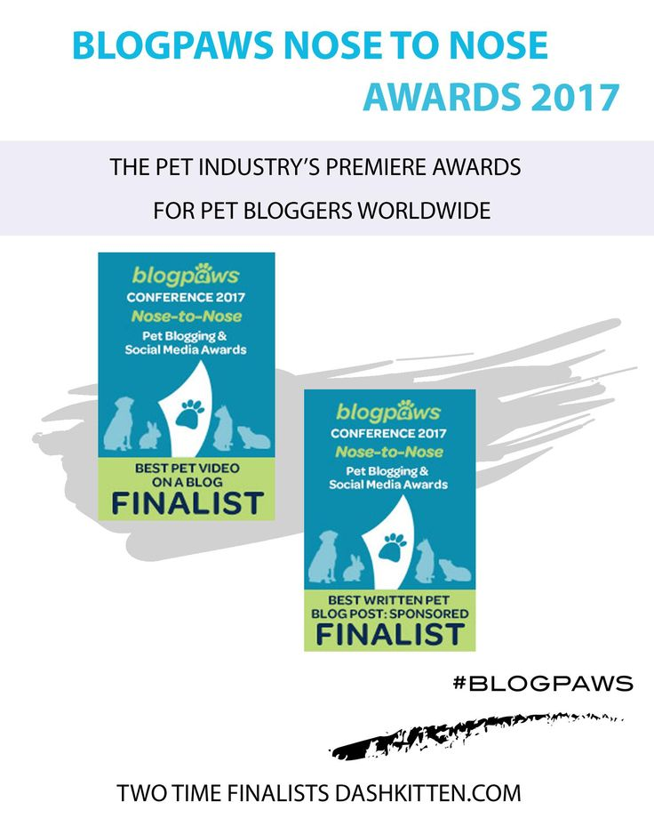The Top Pet Blogging Awards of the year are n the horizon. We introduce some of the greats for you to root for, and find out more about!!