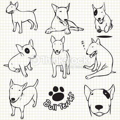Arte vetorial : Bull terrier dog