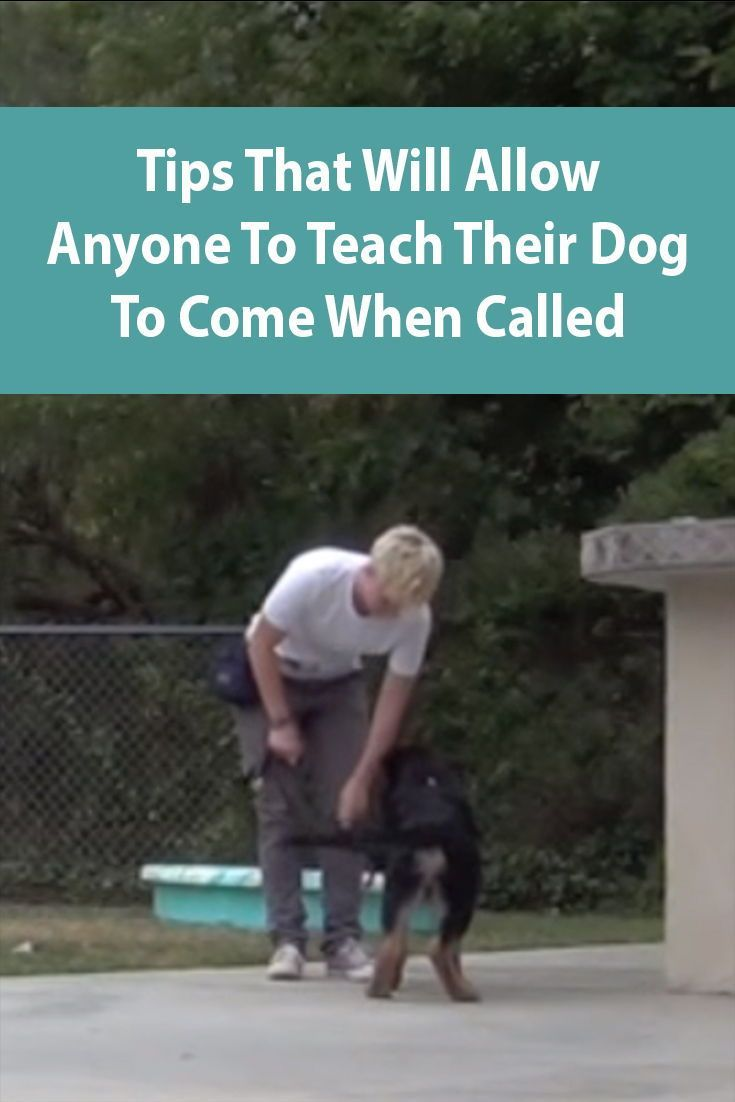 Teach Your Dog To Come When Called Dog Clicker Training Teach