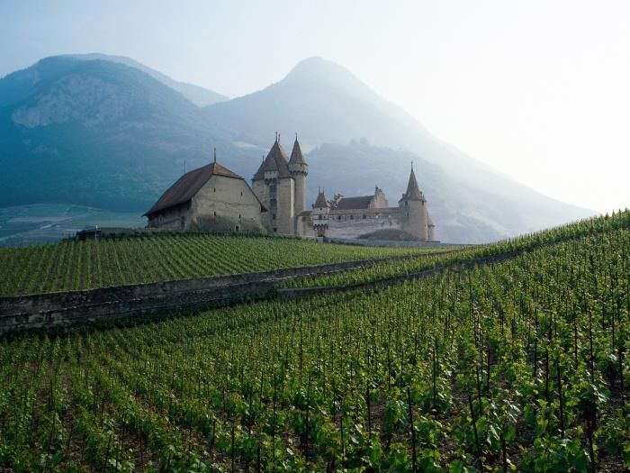 Switzerland - a picturesque vineyard against an old castle