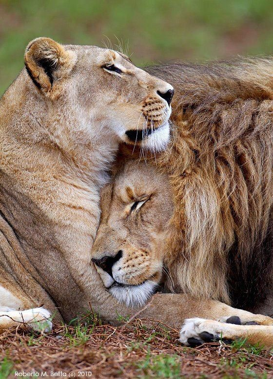 tender moments. we all need our own kind to see and feel a reflection of ourselves.