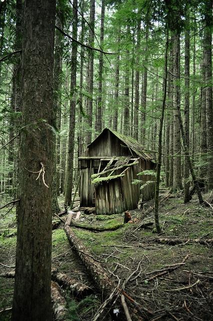 Old Cabin. by Jenna Phelps, via Flickr - Roberts Creek, Sunshine Coast, British Columbia