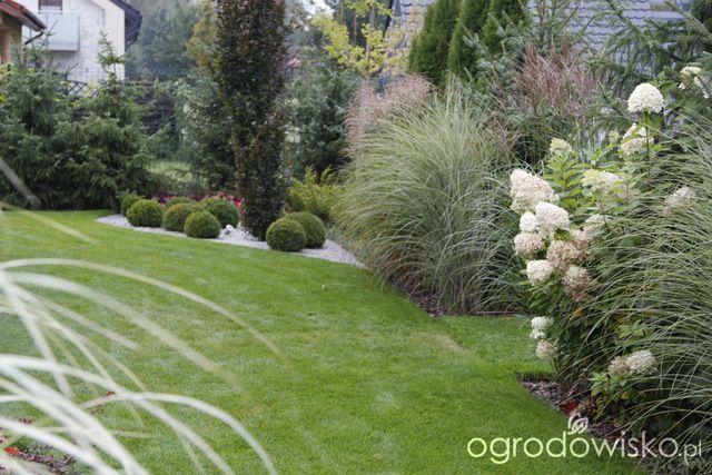Ogród z lustrem - strona 326 - Forum ogrodnicze - Ogrodowisko
