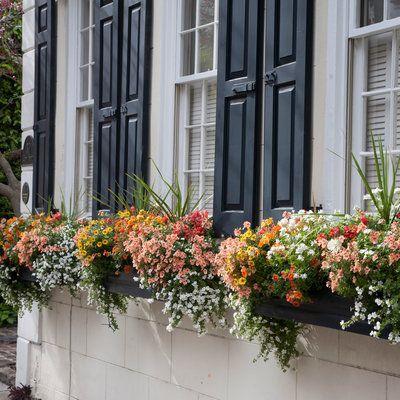 Best 25+ Window boxes summer ideas on Pinterest   Hanging ...