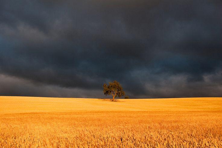 Golden field by Zoritza Williams