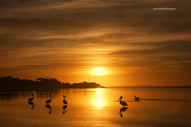 https://flic.kr/p/FRVqdZ | Pelicans enjoying the sunset at Coffin bay - South Australia