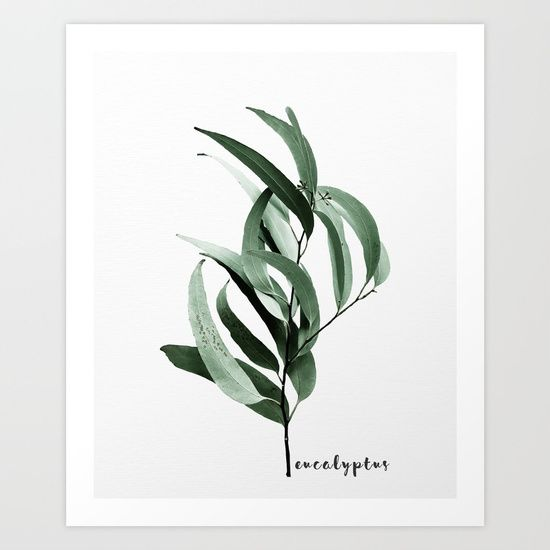 simple still life of eucalyptus leaves from Australia on textured background with typography. Botanical, nature, modern and minimalist.