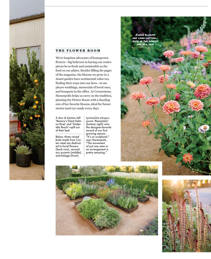 Sunset Magazine Showcases Its New Sonoma Test Gardens, Designed And  Maintained By The Homestead Design