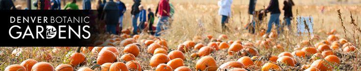 Pumpkin Festival | Denver Botanic Gardens