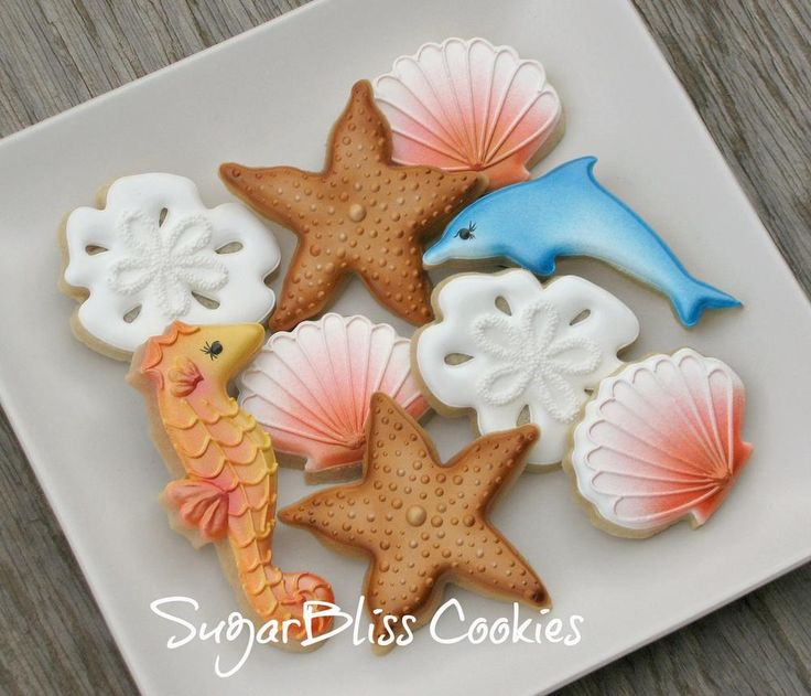 seashells | Cookie Connection