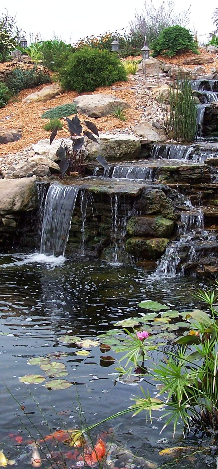 62 best pond images on pinterest ponds garden ponds and koi ponds