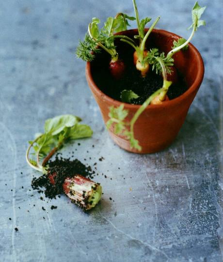 68 Best New Nordic Cuisine Images On Pinterest